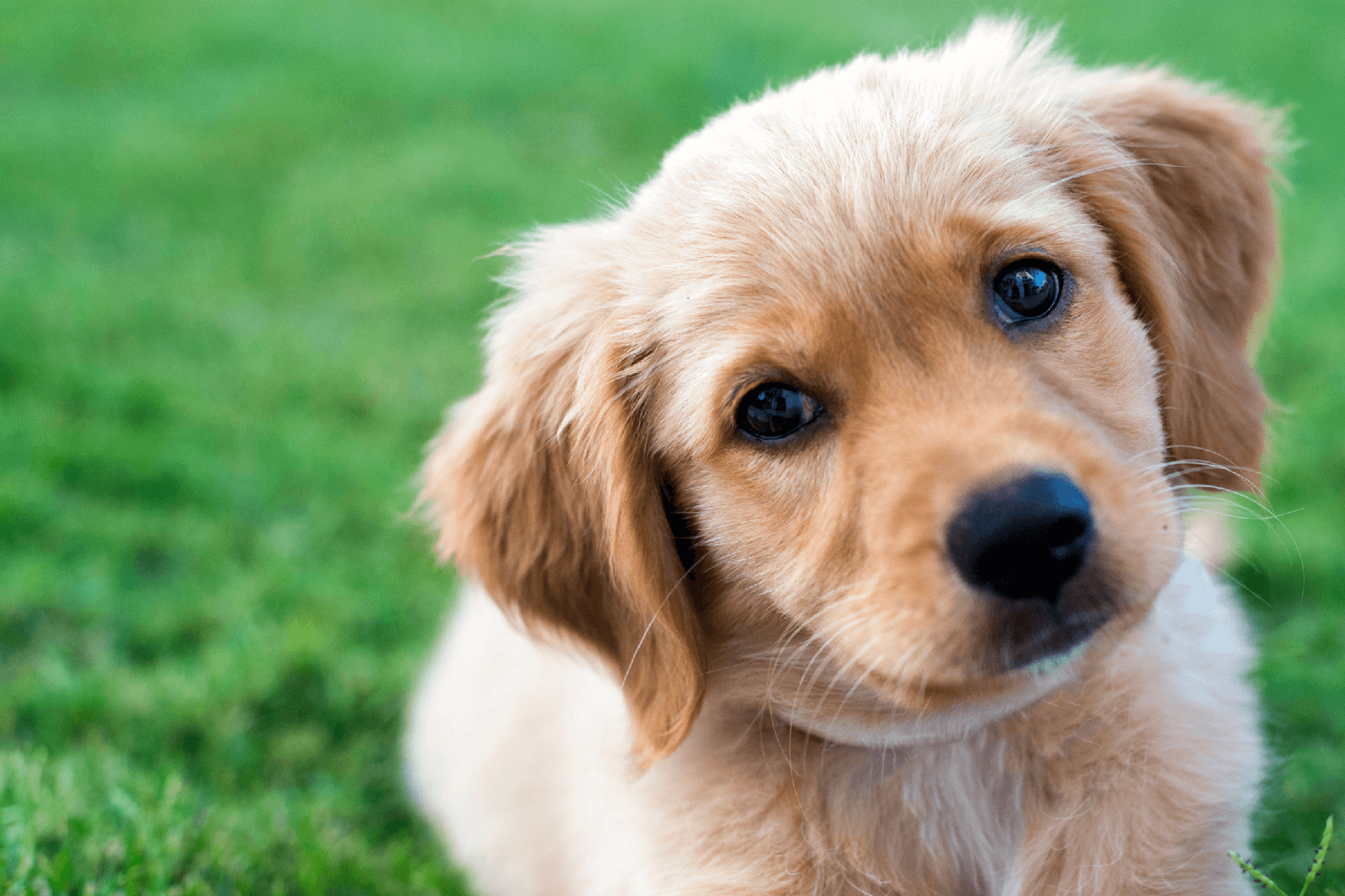 Providing care for your pet for life